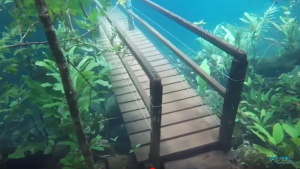 Foto: Luapan sungai yang melanda kawasan hutan ini malah mempercantik hutan. Air yang menutup kawasan hutan berwarna jernih dan membuat pemandangan bawah air yang cantik. Bahkan terlihat seperti Atlantis. (Recanto Ecologico Rio da Prata/Youtube)