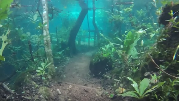 Foto: Recanto Ecologico Rio da Prata merupakan kawasan hutan yang berada di Jardim, Kota di Brasil. Rupanya kawasan hutan ini mengalami hujan lebat dan mengakibatkan banjir. (Recanto Ecologico Rio da Prata/Youtube)