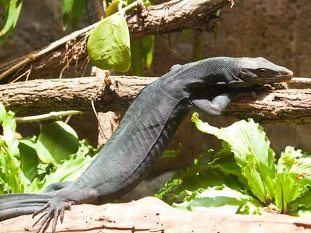 Liburan di Kosta Rika, Bisa Lihat Black Dragon