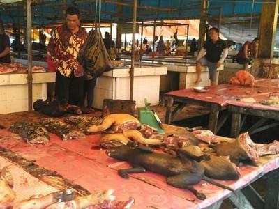 7 Fakta Pasar Tomohon yang Masuk Wildlife Photography of the Year