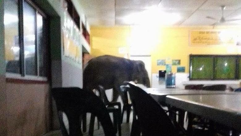 Penampakan Gajah yang Tiba-tiba Nyelonong di Kantin Sekolah