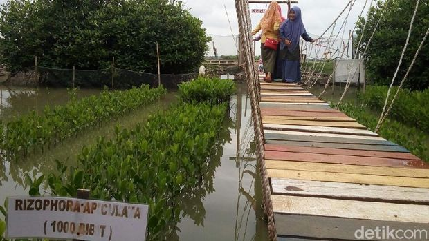 Wisata Hutan Mangrove Baru Favorit Anak Muda di Demak