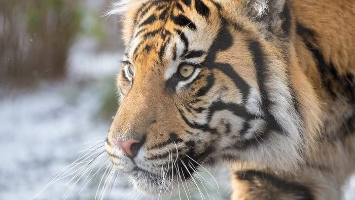 Foto: ZSL London Zoo