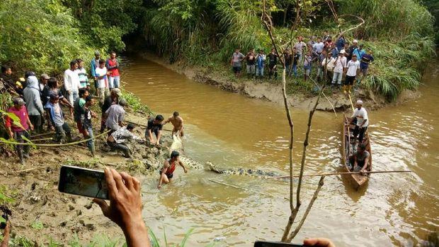 Proses evakuasi buaya dari Sungai Kabuyahan