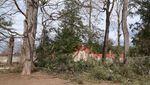 Foto: Pohon Tumbang yang Ditanam Presiden Pertama AS 227 Tahun Lalu