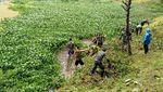 Before-After Hulu Citarum yang Diserbu Prajurit Maung Siliwangi