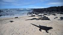 Galapagos Kembali Dibuka untuk Wisatawan