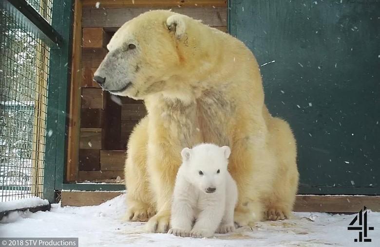 Gemas! Bayi Beruang Lahir di Inggris Setelah 25 Tahun