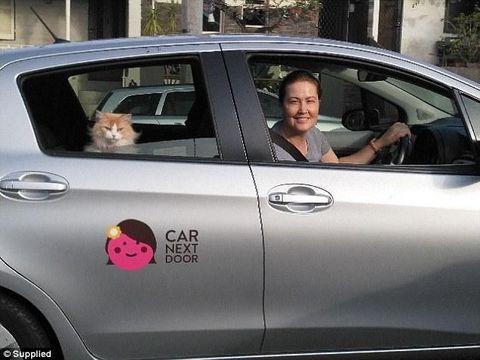 Kisah Wanita yang Sukses Bisnis Sewakan Kucing Demi Biaya Hidup