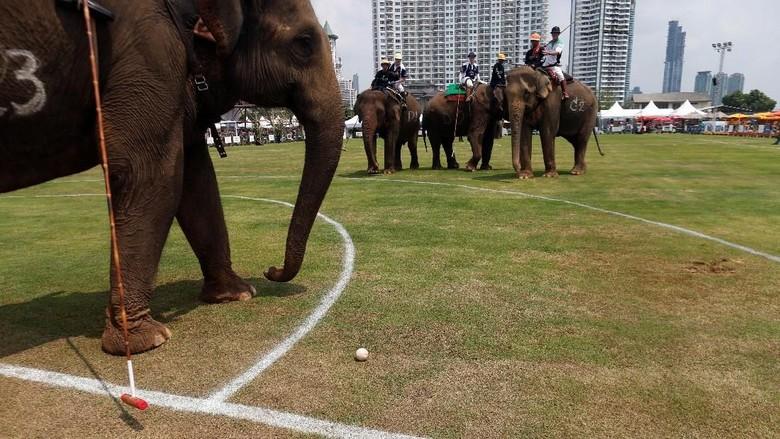 Foto: Saat Gajah-gajah Ikut Pertandingan Polo di Bangkok
