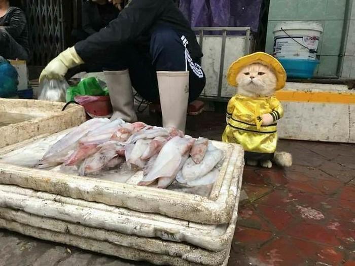 Dog adalah kucing milik Le Quoc Phong. Aksi mereka menyedot perhatian karena Dog melakukan banyak hal unik. Salah satunya berjualan ikan di pasar. Foto: Istimewa