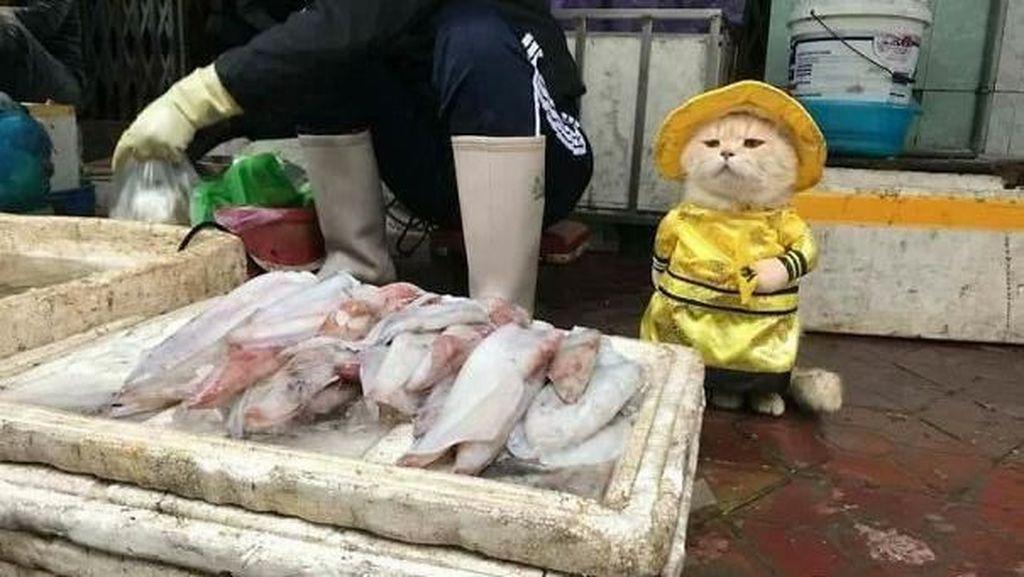 Bikin Gemas! Lihat Kucing Ini Berjualan Ikan, Daging dan Telur di Pasar