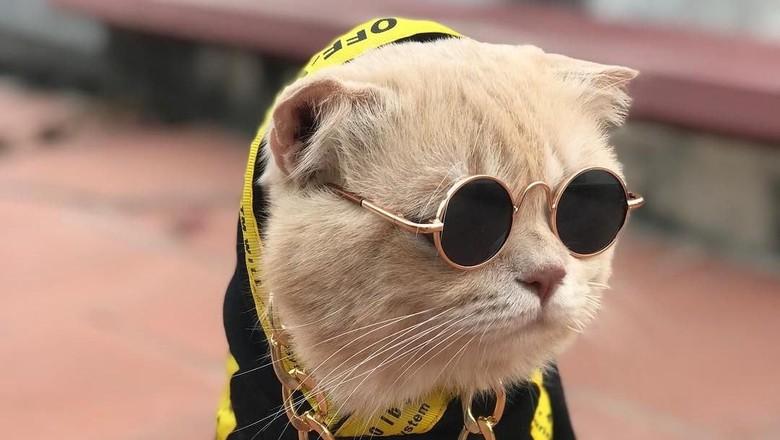 Style Like a Cool Man! Ini Cho Si Kucing Viral yang Bikin Gemas