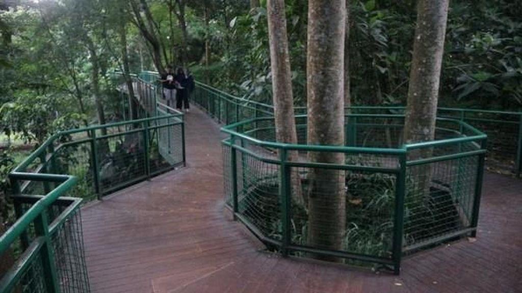 Serunya Forest Walk di Babakan Siliwangi Bandung