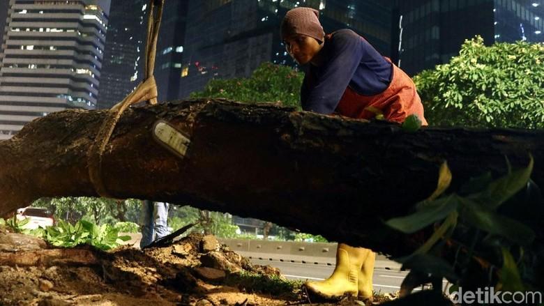 Begini Proses Pemindahan Pohon di Sudirman-Thamrin