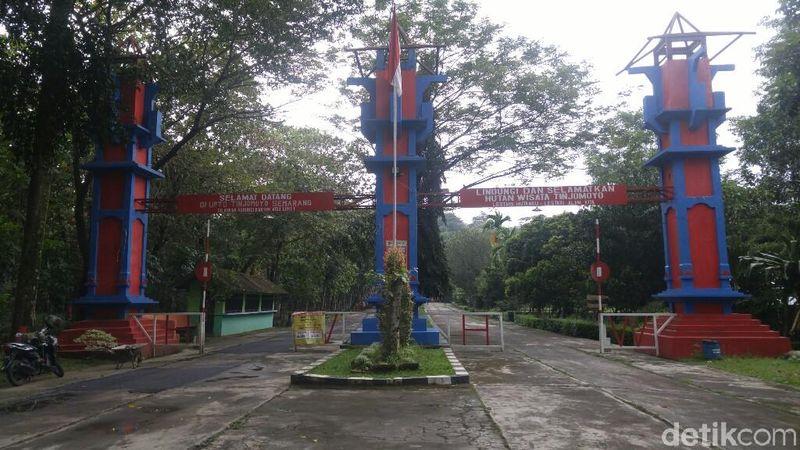 Bekas kebun binatang Kota Semarang di hutan Tinjomoyo lama terbengkalai. Kini dibangkitkan lagi sebagai obyek wisata dan dibangun pasar digital di tengah hutan (Angling Adhitya Purbaya/detikTravel)