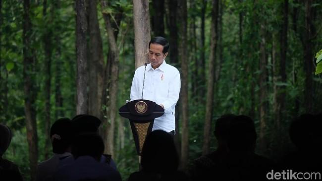 Foto: Jokowi saat panen raya di Tuban (Dika-detikcom)