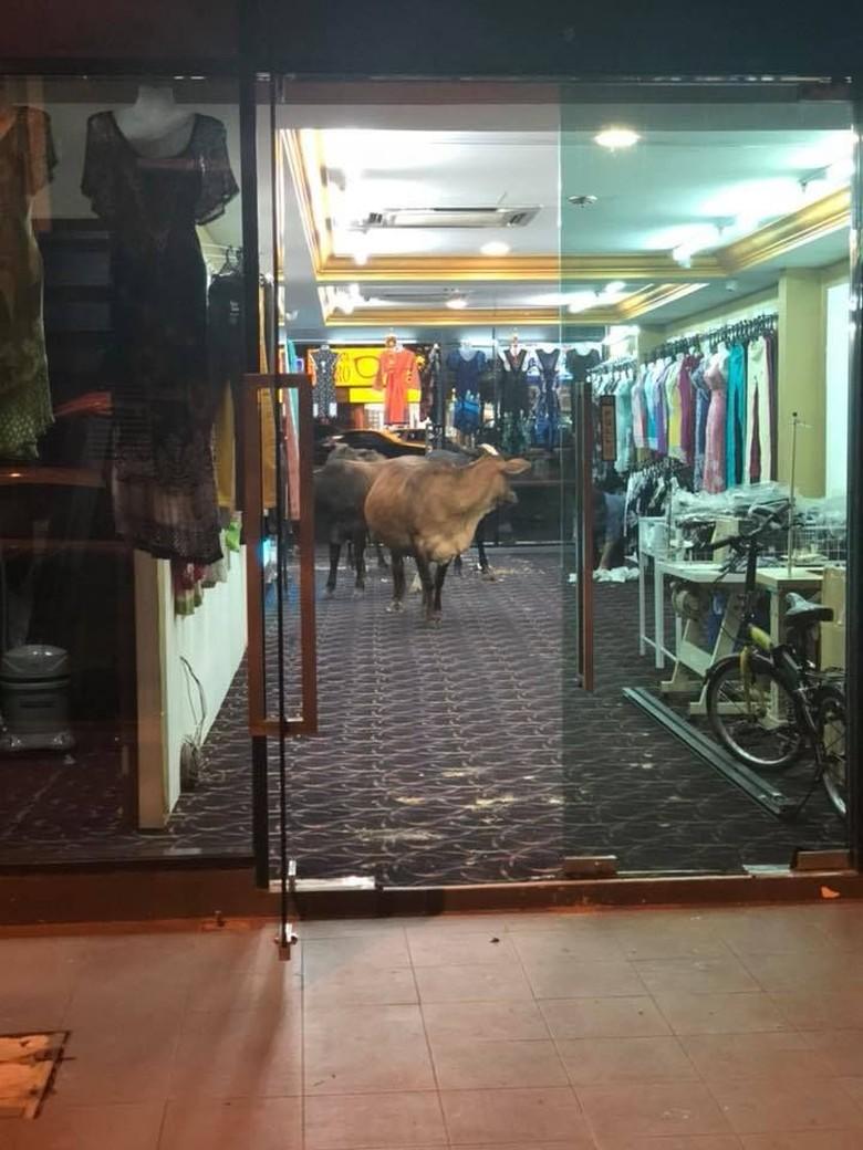 Viral Foto Sapi Mendadak Masuk ke Toko Baju, Ini Cerita di Baliknya