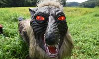 Serigala Monster yang bakal ditaruh di sawah-sawah Jepang (AFP)