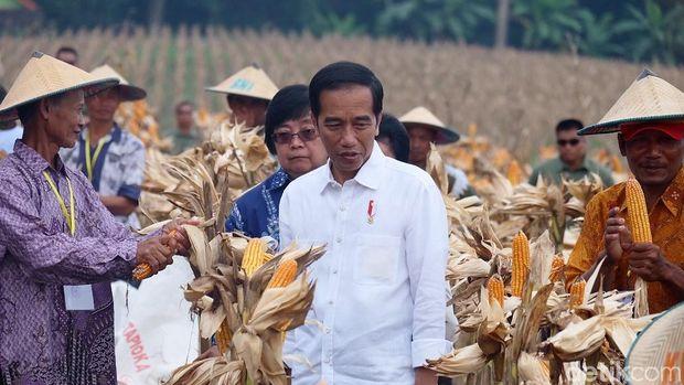 Presiden Jokowi di Tuban, Jawa Timur
