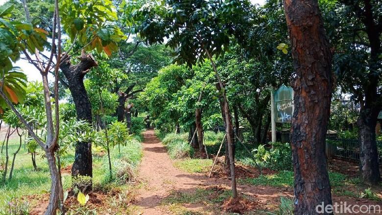 Foto: Pohon Sudirman-Thamrin Pindah Rumah ke Taman BMW