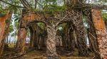 Foto: Ross Island, Pulau Hantu yang Bangunannya Dimakan Hutan