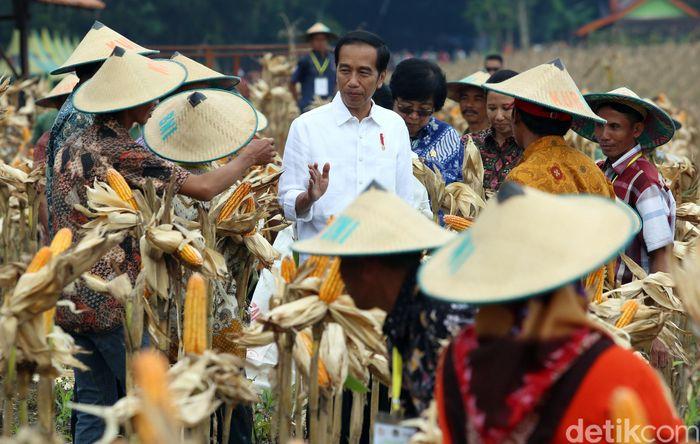 Presiden Jokowi berdialog bersama para petani saat panen raya jagung di Desa Ngimbang, Tuban, Jawa Timur, Jumat (9/3/2018).