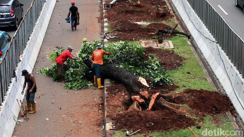 Akhir Pekan, Pemindahan Pohon Sudirman-Thamrin di Siang Hari
