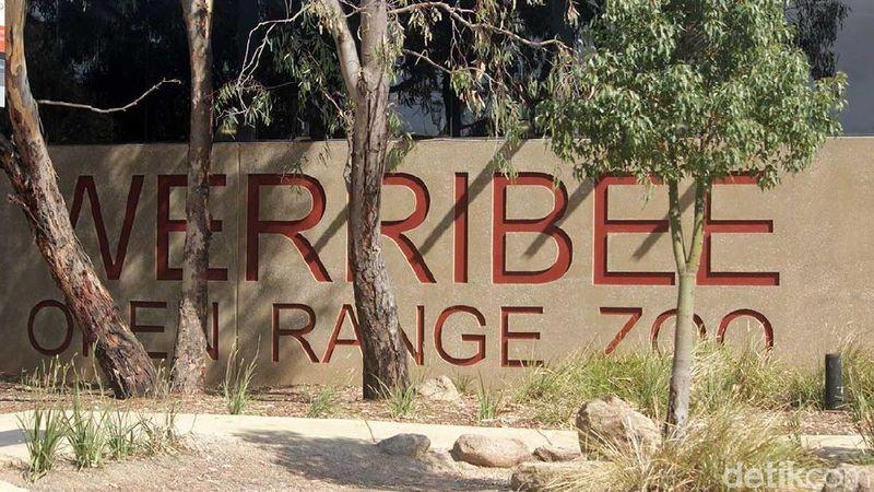 Foto: Werribee Open Range Zoo di Australia merupakan kebun binatang di daerah sub-urban Melbourne yang cukup populer. Namun walau mengusung kata Zoo, konsep yang ditawarkan ternyata sangat berbeda dengan kebun binatang serupa di Indonesia (Randy/detikTravel)