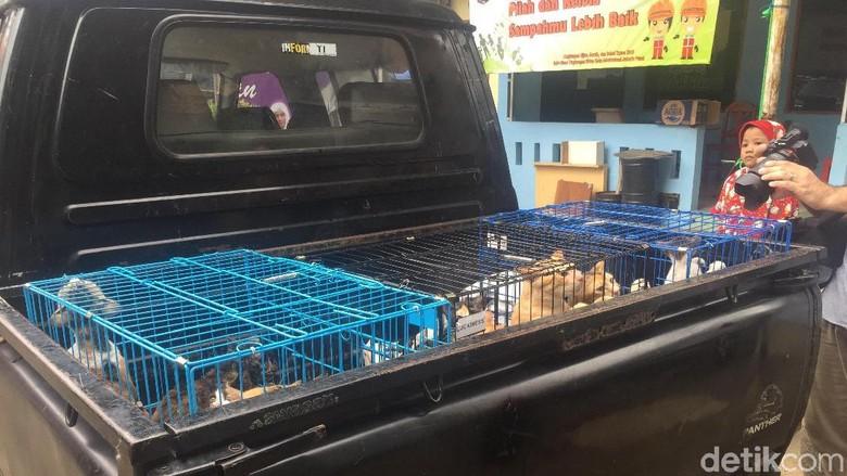 Meong! Penampakan Puluhan Kucing Liar yang Ditangkap karena Bau