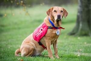 Di Inggris, Anjing Digunakan untuk Deteksi Dini Kanker Prostat