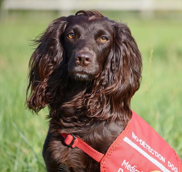 Kizzy tak hanya punya rambut lebat, namun juga bisa mengendus kanker urologi lho. (Foto: Facebook/Medical Detection Dogs)