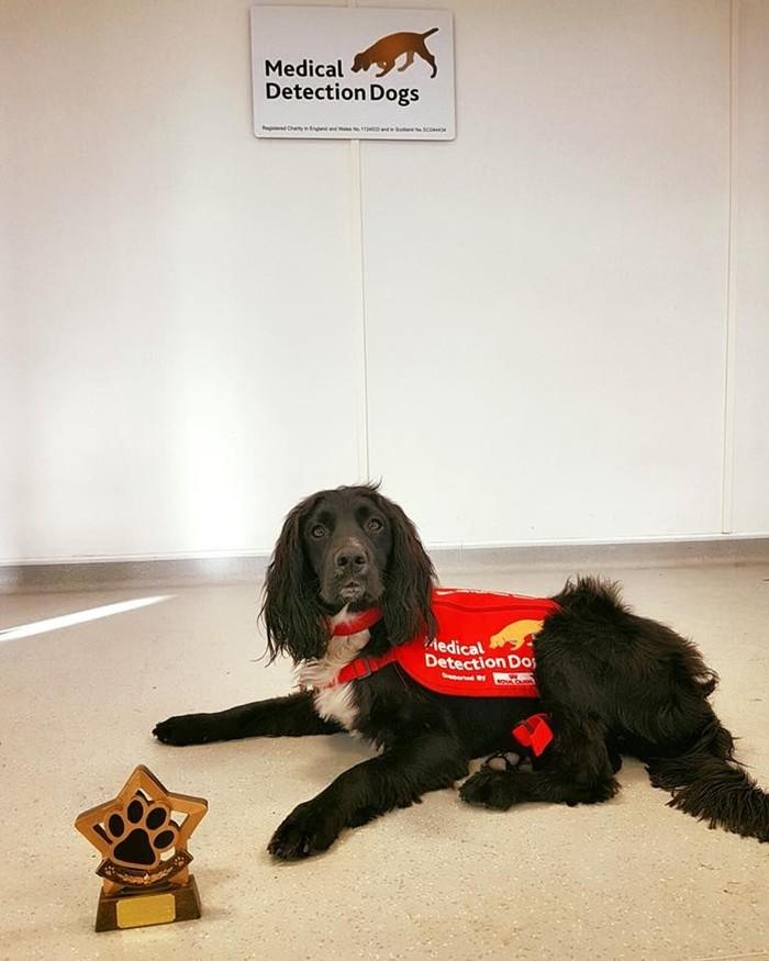 Ini Zen, anjing yang tergabung dalam tim pendeteksi Parkinson. (Foto: Facebook/Medical Detection Dogs)