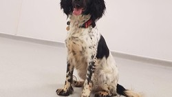 Medical Detection Dogs adalah lembaga yang melatih anjing untuk bisa mendeteksi berbagai macam penyakit, mulai dari kanker hingga parkinson.