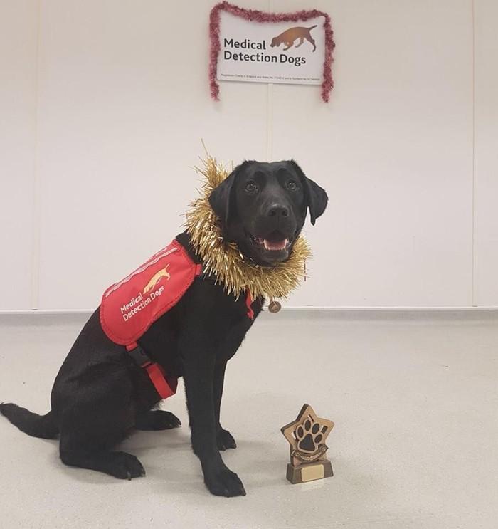 Lucu, Sally adalah anjing yang sedang dilatih untuk bisa mendeteksi malaria. (Foto: Facebook/Medical Detection Dogs)