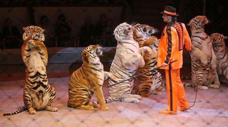 Hewan Liar Dilarang Beraksi di Atraksi Sirkus di Inggris Mulai 2020