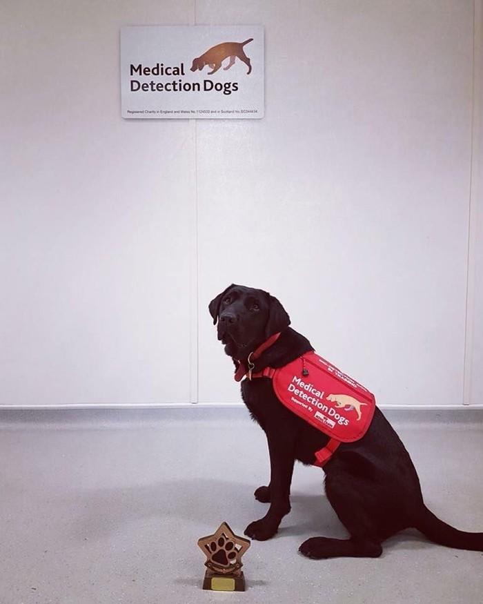 Hitam dan menggemaskan, Rumba adalah anggota tim pendeteksi penyakit Parkinson. (Foto: Facebook/Medical Detection Dogs)