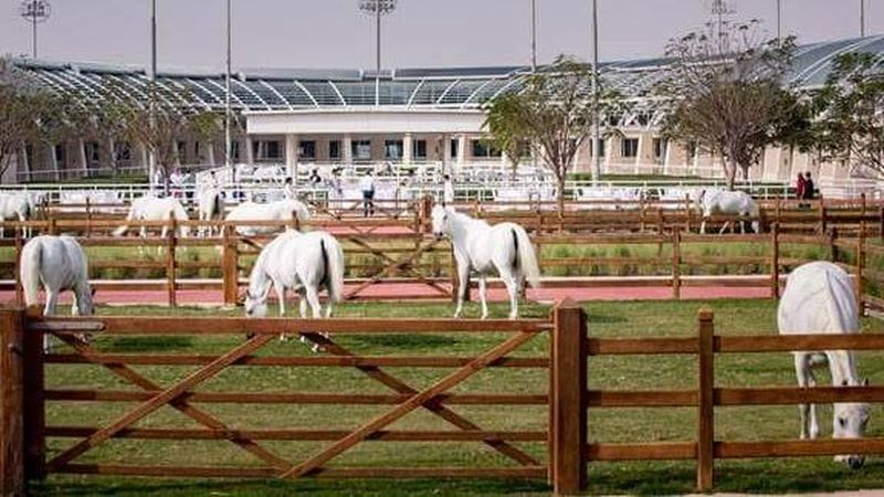 Inilah Al Shaqab, sebuah resor bintang lima dengan fasilitas serba mumpuni untuk kuda di Doha, Ibukota Qatar (Al Shaqab)