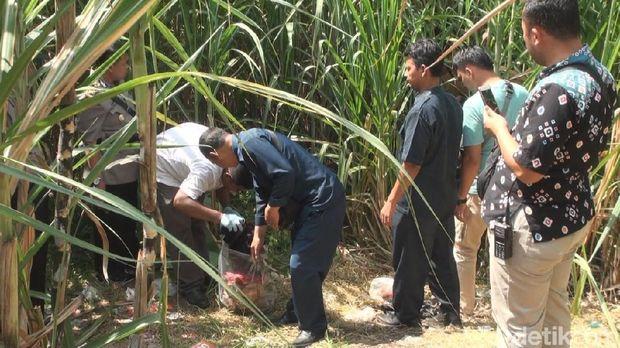 Penemuan jenazah Wakil Ketua DPC PPP di kebun tebu/