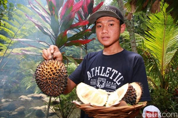 Selain durian merah, ada juga durian orange yang juga varian lokal Banyuwangi. Pokoknya, Kampung Durian adalah destinasi impian buat kamu pecnita durian. (Ardian/detikTravel)