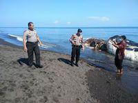 Wakapolsek Sawan, Iptu Ida Bagus Astawa, memeriksa paus sperma yang terdampar