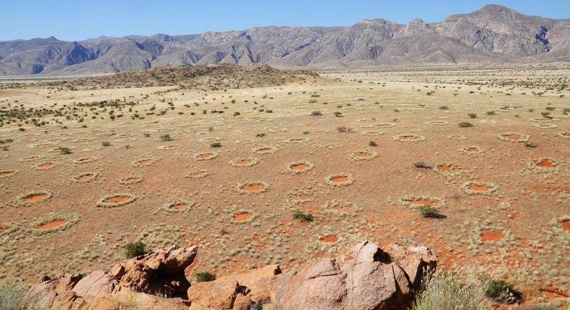 Lingkaran misterius ini dikelilingi rerumputan. Besarnya beragam, untuk diameternya sendiri mencapai sekitar 2-15 meter (Stephan Getzin/BBC)