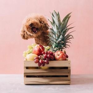 Gemas! Ini Ekspresi Imut Cookie, Poodle yang Suka Pasta dan Buah