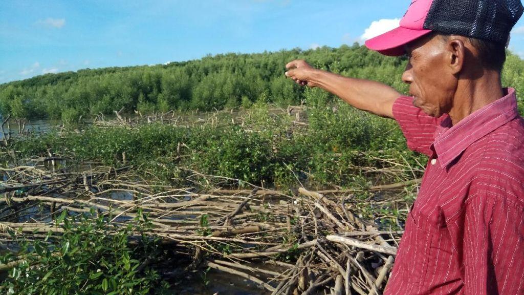 Hutan Mangrove Dibabat, Warga Sulsel Bikin Petisi