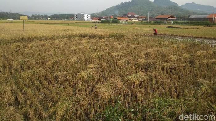 Pemkab Trenggalek Cabut Status 70 Hektare Lahan Pertanian
