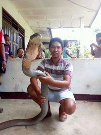 Fakta Mengagetkan King Cobra 'Raksasa' di Kalimantan
