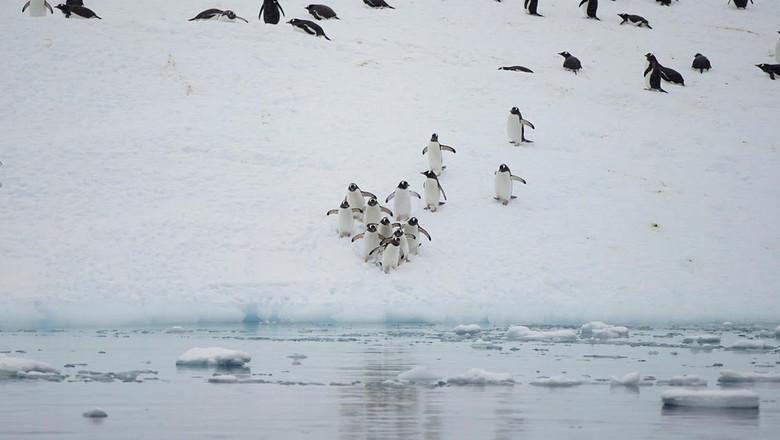 Penguin di Antartika (Alexandre Meneghini/Reuters)