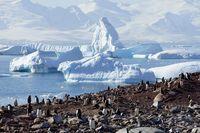 Koloni penguin di Antartika (Alexandre Meneghini/Reuters)