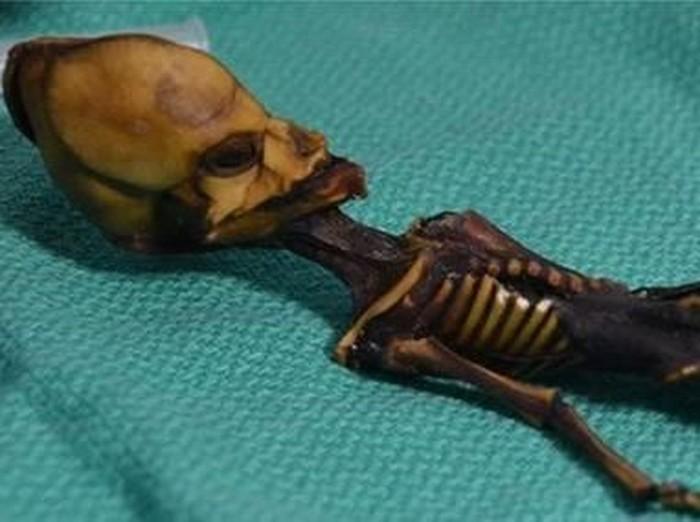 Mumi Ata sebelumnya diduga jenazah alien. (Foto: BBC)