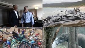 Riuh Dunia dalam Gambar: Paus Terdampar Hingga Gajah Merokok